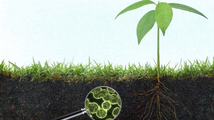 Importance of the Microbiome of Soil